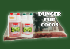 D�nger f�r Coco